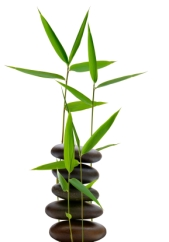 bamboo_Small